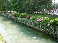 fiori-sul-ruscello