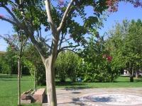 giardino-pubblico